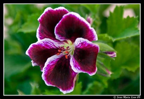 imagenes de varias flores plantas flores varias jesus maria leon