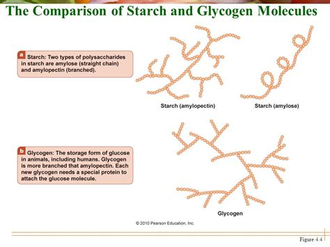 chapter 4 carbohydrates sugars starches fibers chapter 4 carbohydrates sugars starches and fiber ppt