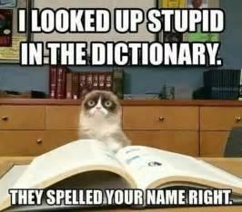 Sarcastic Cat Meme - best 25 sarcastic memes ideas on pinterest funny