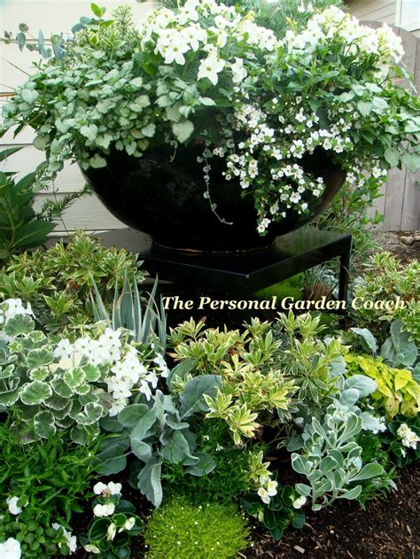 White Flower Gardens Doing This For My Front Entry White Flowers Silver Foliage In Black Pots Garden