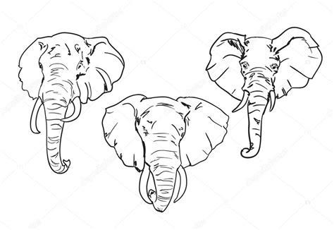 szkic głowy słonia grafika wektorowa 169 alsoush 86605456