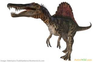 Dino Images Spinosaurus Facts For Students Information Pictures