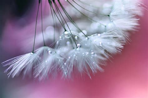lafugue logos photography macro photography just like a beautiful poem by lafugue