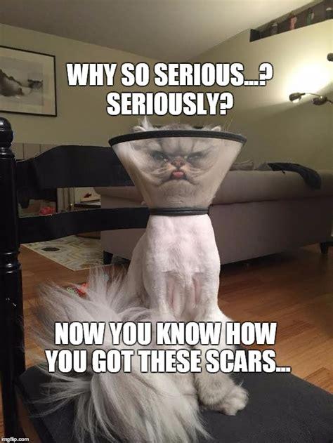 Cone Of Shame Meme - joker cat vs cone of serious imgflip