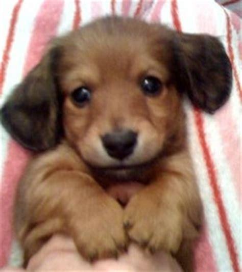 puppies in arkansas breeders in arkansas