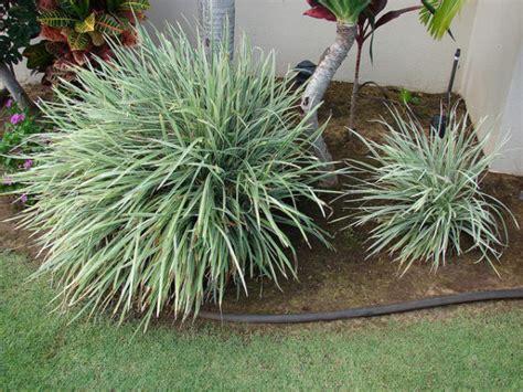 piante da giardino pieno sole piante da pieno sole