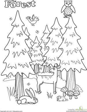 rainforest coloring pages preschool forest worksheet education com
