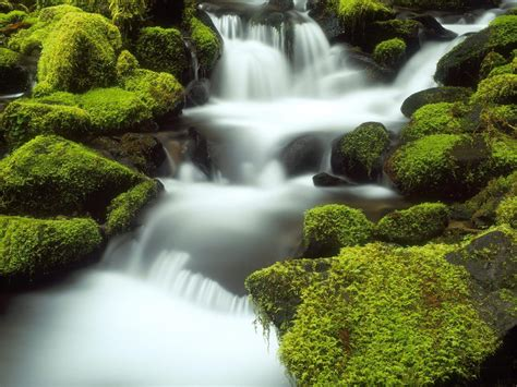 nature wallpapers  desktop backgrounds full screen