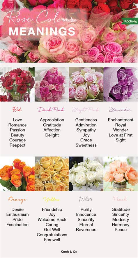 color of roses meanings 8 colour meanings the koch