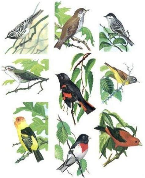 edi pentol types of birds with pictures