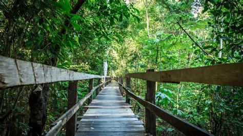 canopy amazon jungle treks or canopy nature walks amazon jungle