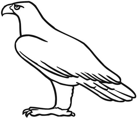 martial eagle coloring pages eale drawings for kids clipart best