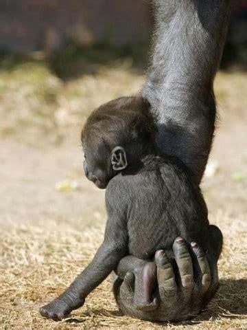 imagenes comicas de monos fotos de monos bebes para descargar en facebook imagenes