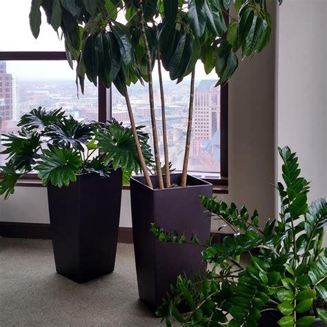 interior plant interior plant maintenance milwaukee wi interior plant
