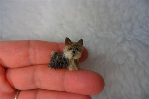 miniature yorkie puppy the world s catalog of ideas