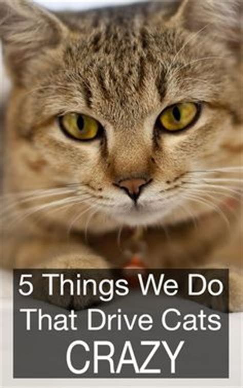 The Craziest Things We Do For by 5 Things We Do That Drive Cats Cats We And Other