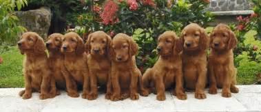 Pics photos male puppy names l m