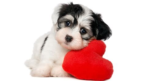 Ped Simple animals simple background pet baby animals hearts