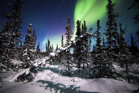 denali national park alaska northern lights forest winter snow tree spruce hd wallpaper
