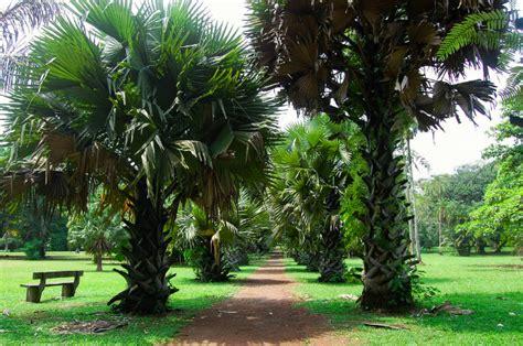 Limbe Botanic Garden 6 Reasons I Being A Cameroonian Precious