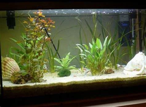 aquarium design eau chaude blog de aqua eau douce poissons d aquarium d eau douce
