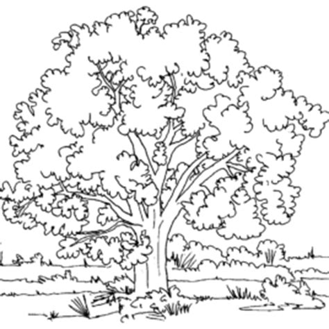 mustard tree coloring page biblical mustard tree coloring pages coloring pages