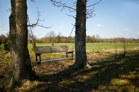 comfortable swing bench   trees stock photo