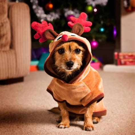 Pet Clothes Animal get clothing ready for wishforpets