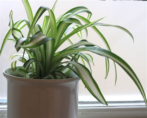 good house plant house plants are good for you growing nicely