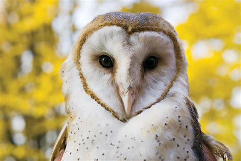 What Is A Barn Owl barn owls at the pittsburgh zoo the world of zoobooks