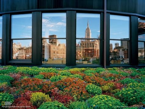 Garden Manhattan by Rooftop Picture New York Wallpaper National Geographic Photo Of The Day