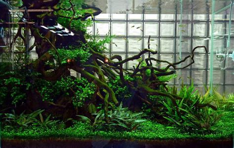 Aquascaping Designs & Ideas for Freshwater, Reefs