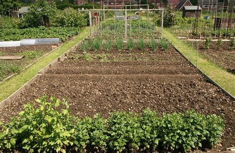 Vegetable Garden Crop Rotation Crop Rotation Planning Harvest To Table