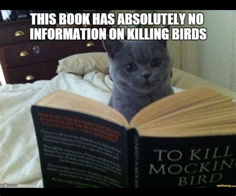 To Kill A Mockingbird Cat Meme - 71 best to kill a mocking bird book cover images on