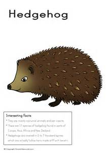 hedgehog picture fact box