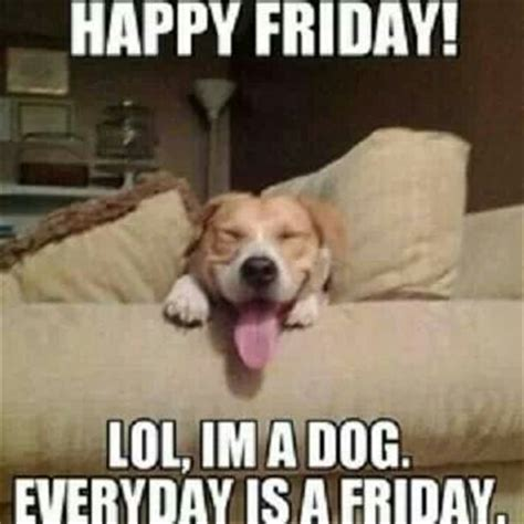 Dog Friday Meme - happy friday dog sayings cute posts pinterest