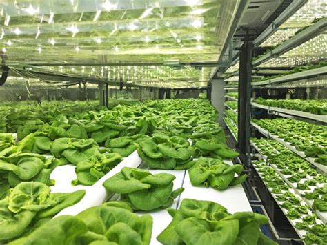 foot shipping container farm  grow  acres  food