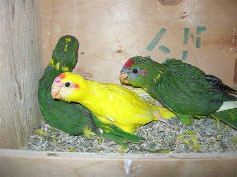 alimentazione uccelli alimentazione degli uccelli parrotkit