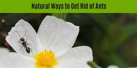 best way to get rid of ants in bathroom how to get rid of spiders inside and outside the house