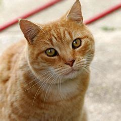 Can You Shower A Cat by File Cat03 Jpg Wikimedia Commons