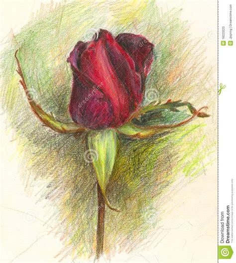 fiori disegnati a matita fiore scritto a matita della rosa illustrazione di stock
