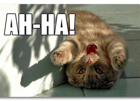 Ha Ha Meme - ah ha meme cats