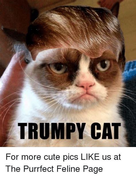 Purrrfect Meme - 25 best memes about trumpy cat trumpy cat memes