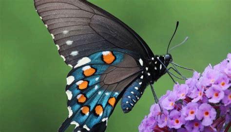 imagenes mariposas whatsapp 30 mariposas coloridas im 225 genes para compartir por