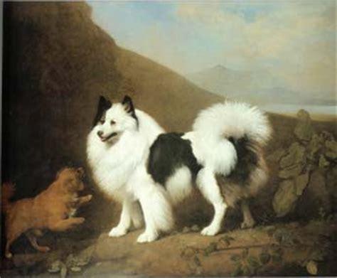 original pomeranian the 18th century american duchess