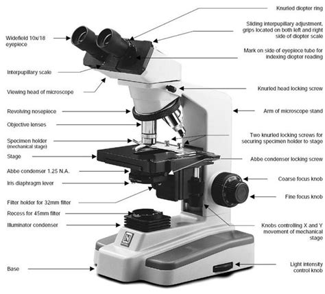 Parts Of A Light Microscope by Compound Light Microscope Parts Microscope Heroes