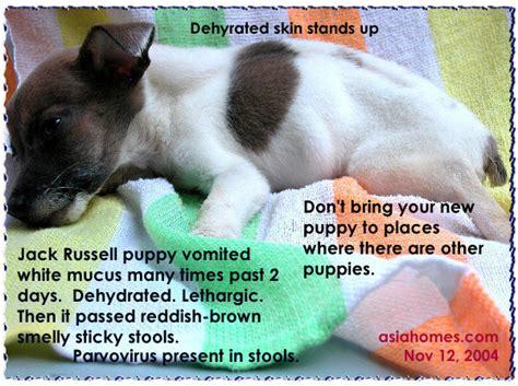 031208asingapore veterinary cat rabbits hamster