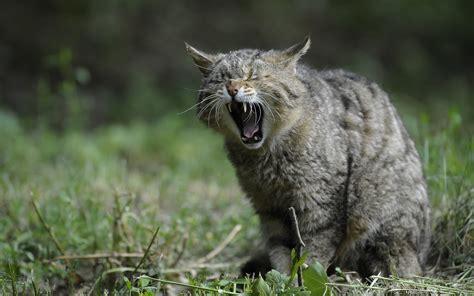 imagenes impresionantes de gatos fonds d 233 cran chats chatons gratuits