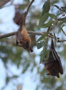 flying fox for backyard 100 backyard flying fox wellness in saalfelden