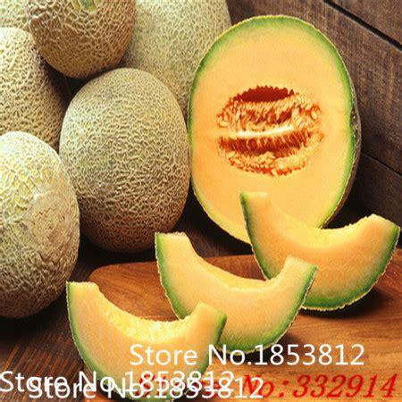 melon daging orange aroma penjualan kabar baik 50 melon hijau biji kuning orange